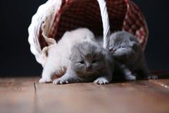 Katjes die in mand spelen royalty-vrije stock foto's