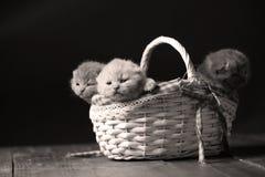 Katjes die in mand spelen stock foto's