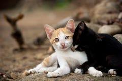 Katjes die op de rots spelen Stock Afbeeldingen