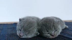 Katjes die op een blauwe deken slapen stock videobeelden