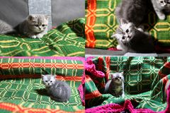 Katjes die op een traditioneel tapijt spelen, multicam Royalty-vrije Stock Foto's