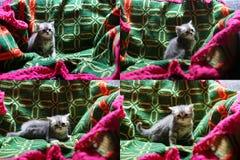 Katjes die op een traditioneel tapijt spelen, multicam Stock Fotografie