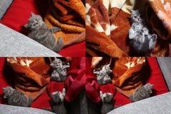 Katjes die op een traditioneel tapijt spelen, multicam Stock Afbeelding
