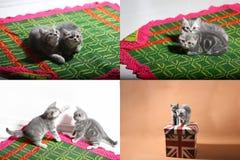 Katjes die op een traditioneel tapijt spelen, multicam Stock Afbeeldingen
