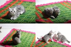 Katjes die op een traditioneel tapijt spelen, multicam Royalty-vrije Stock Afbeeldingen