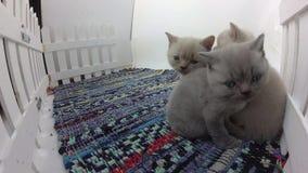 Katjes die samen slapen stock video