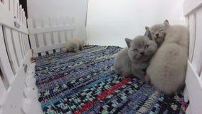 Katjes die samen slapen stock videobeelden