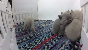 Katjes die samen slapen stock footage