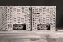 Katjes die in sommige houten kratten verbergen Stock Afbeeldingen