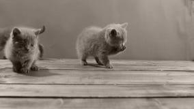 Katjes die voedsel voor huisdieren van de vloer eten stock video