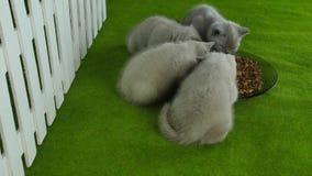 Katjes die voedsel voor huisdieren van een groene vloer eten stock videobeelden