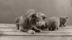 Katjes die voedsel voor huisdieren van houten vloer eten stock videobeelden