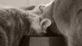 Katjes die voedsel voor huisdieren van kom eten stock footage