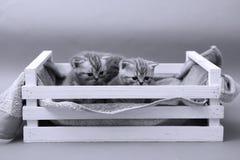 Katjes in een houten krat Royalty-vrije Stock Afbeelding