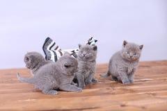 Katjes in een mand Royalty-vrije Stock Foto's