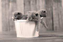 Katjes in een mand Royalty-vrije Stock Fotografie