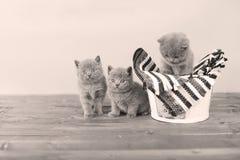 Katjes in een mand Royalty-vrije Stock Afbeeldingen