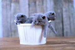 Katjes in een mand Royalty-vrije Stock Afbeelding