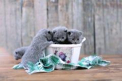 Katjes in een mand Stock Foto's