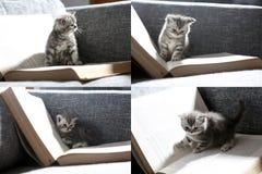 Katjes en boeken, multicam, het scherm in vier delen wordt verdeeld dat Royalty-vrije Stock Afbeelding