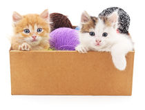 Katjes en kleurrijke ballen in de doos Stock Foto's