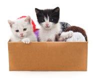 Katjes en kleurrijke ballen in de doos Royalty-vrije Stock Foto