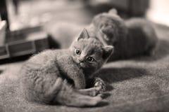 Katjes en moeder op een tapijt die omhoog eruit zien Royalty-vrije Stock Foto
