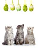 Katjes en paaseieren stock afbeelding