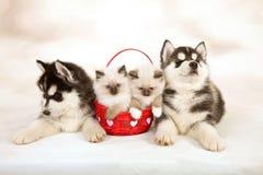 Katjes en puppy Royalty-vrije Stock Afbeeldingen