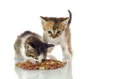 Katjes het eten Royalty-vrije Stock Afbeeldingen