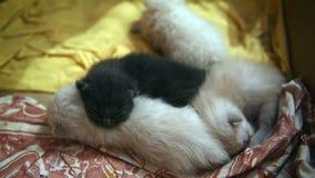 Katjes het slapen stock video