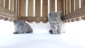 Katjes het verbergen stock videobeelden