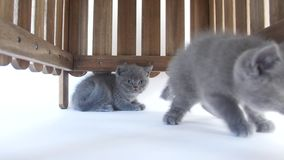 Katjes het verbergen stock video