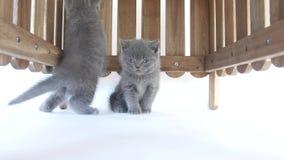 Katjes het verbergen stock footage