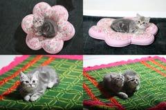 Katjes, katten en hoofdkussens, multicam, net 2x2 Stock Afbeeldingen