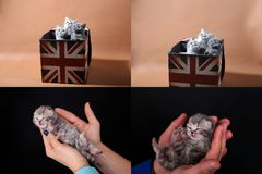 Katjes in menselijke hand, multicam Stock Afbeeldingen