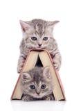 Katjes met boek Royalty-vrije Stock Foto