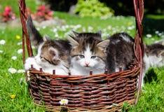 Katjes openlucht spelen Stock Foto's