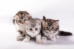 katjes spelen op een witte achtergrond Royalty-vrije Stock Foto's