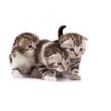 katjes spelen op een witte achtergrond Royalty-vrije Stock Afbeelding