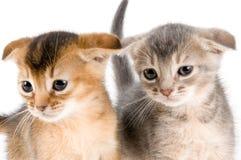 Katjes in studio royalty-vrije stock foto's