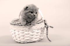 Katjesportret die in een mand blijven Stock Afbeeldingen