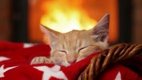 Katjesslaap bij de open haard op rode deken stock videobeelden