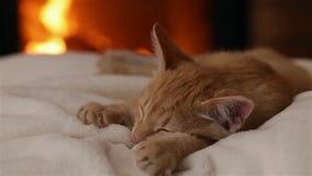 Katjesslaap bij de open haard op witte deken stock videobeelden