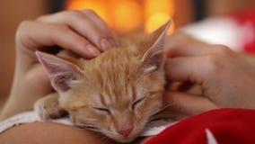 Katjesslaap die onder beschermende handen liggen - geniet van de open haard stock footage