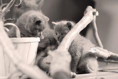 Katjesspel onder takken stock afbeelding