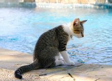 Katjeszitting door pool royalty-vrije stock afbeelding