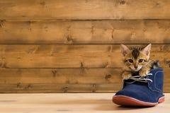 katjeszitting in een blauwe schoen op de achtergrond van houten muur stock foto's