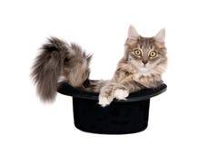 Katjeszitting in een hoed Stock Afbeeldingen