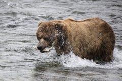 Katmai-Braunbären; Bach-Fälle; Alaska Lizenzfreies Stockbild
